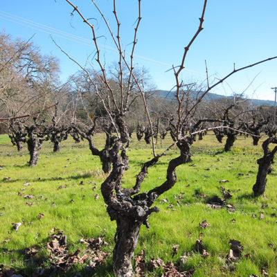 Asia/Australia 2013: Sonoma wine tasting