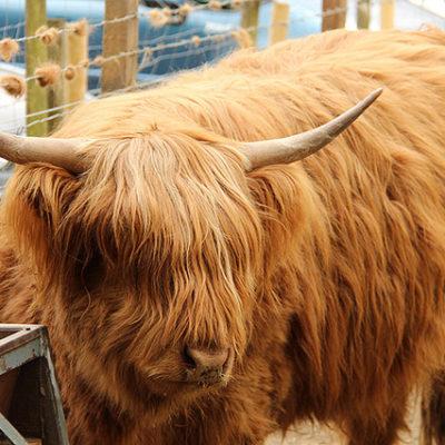 Scotland 2013: Highlands sights day 2