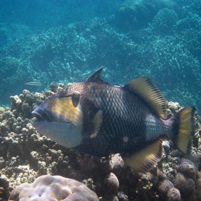 Bali: snorkeling at Menjangan Island