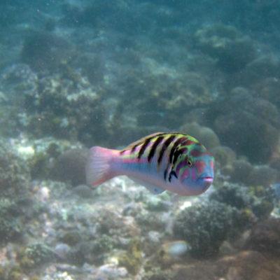 Candidasa: snorkeling at Gili Mimpang and Blue Lagoon