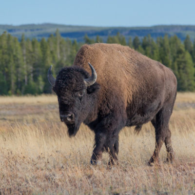 Wild West 2015: Yellowstone (Day 1)