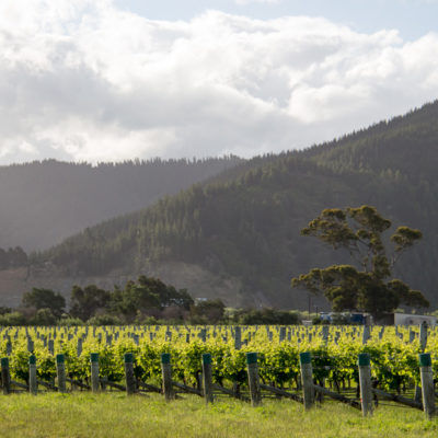 Marlborough: wine tasting, day 1
