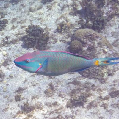 Grand Cayman: snorkeling